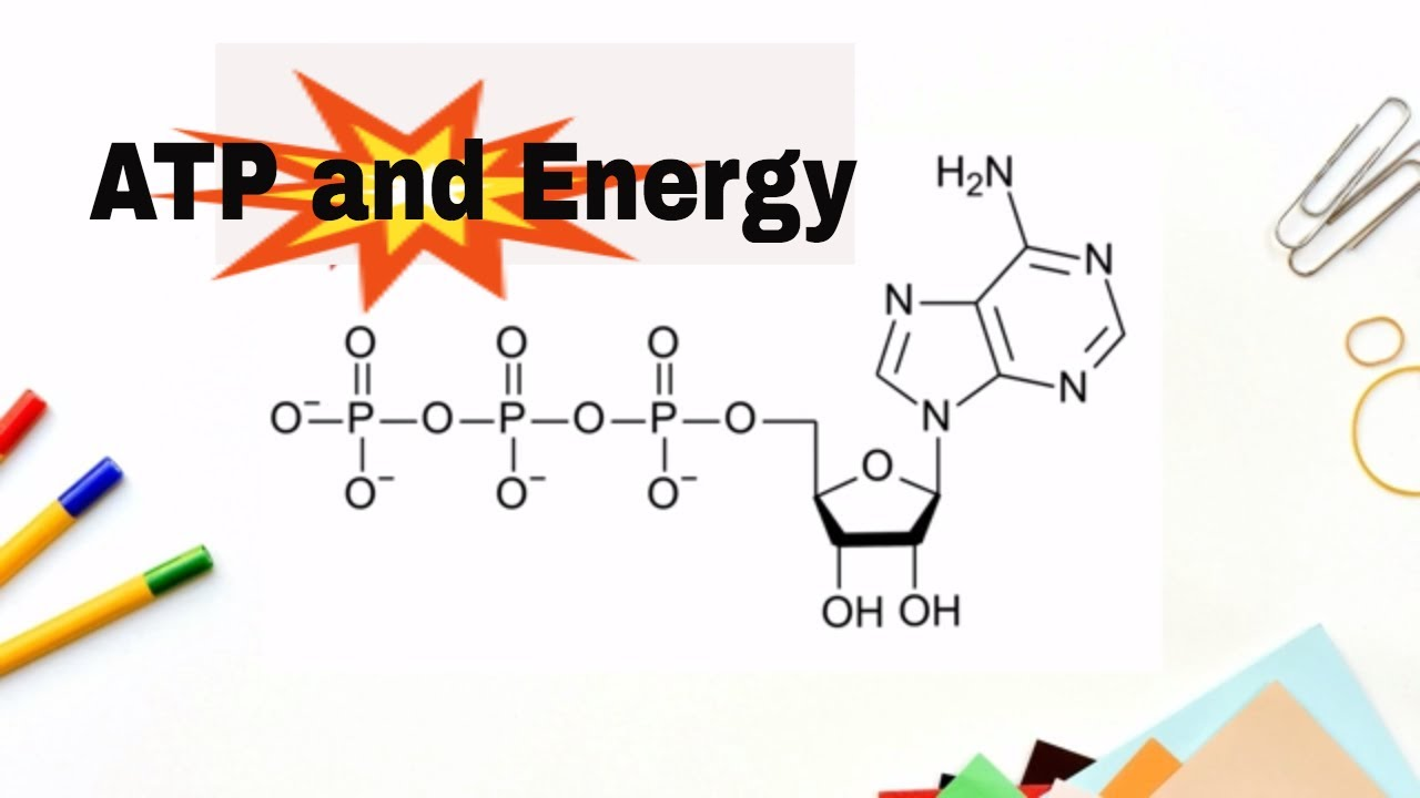 How Do We Get Energy From Atp Adenosne Triphosphate