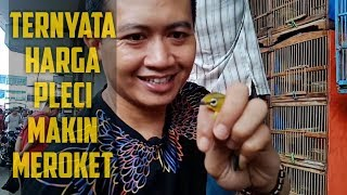 BERBURU PLECI DI PASAR BURUNG KEBAYORAN JAKARTA