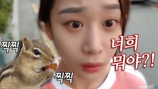 서울 도심속에서 다람쥐 부대에게 습격당함