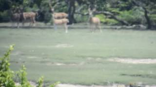 Leopard at Wilpattu Nationalpark