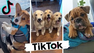 Dogs Doing Funny Things TIK TOK Compilation ~ Cutest Doggos of TikTok ~ Puppies ~ Doggonit