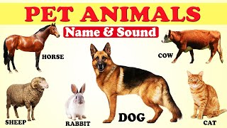 🐴🐮🐶 PET ANIMALS NAME AND SOUND FOR KIDS | 🐷🐏🐓FARM ANIMALS | DOMESTIC ANIMALS |