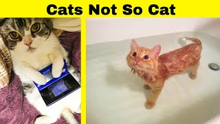 Cats Doing Not So Cat Things