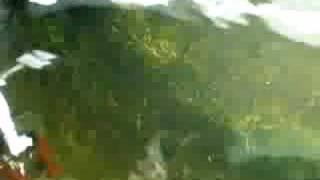 ベステル・アムール・シロチョウザメです。