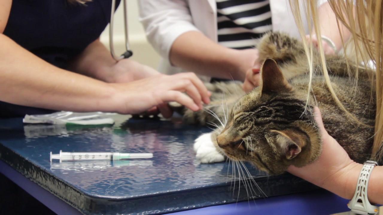 Plastic Surgery Cat Lady