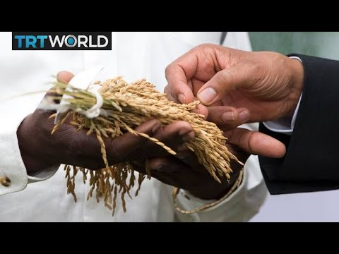 Senegal's government pushes for rice self-sufficiency | Money Talks