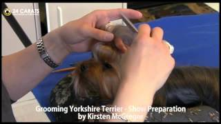 Grooming Yorkshire Terrier Part 1 - Show Preparation