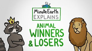MinuteEarth Explains: Animal Winners and Losers