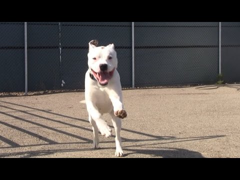 60 Seconds of Shelter Dogs Running Into Cameraman