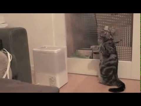 立って煙と戦う猫