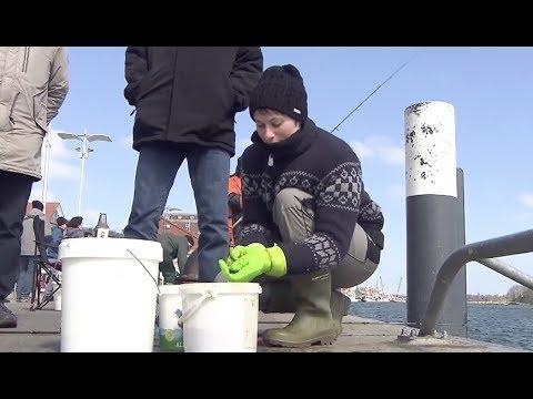 Heringsangler in Kappeln wegen Fischabfällen in der Kritik
