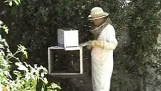 Safely Remove a Bee Swarm - Nutritionist Karen Roth - San Diego