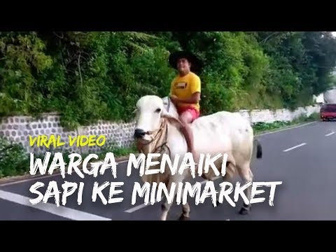 viral-video-warga-menaiki-sapi-ke-minimarket,-bukan-sapi-murah,-harganya-rp70-juta