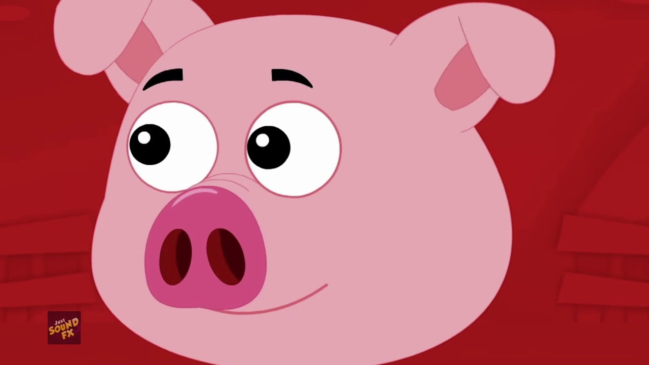Pig Grunt   Pig Sound Effect   Pig Sounds and Pictures ...