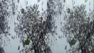 Nhạc Trịnh (09 of 11): Về thăm mái trường xưa - Phương Vy - Diễn viên: Hoa ban tím
