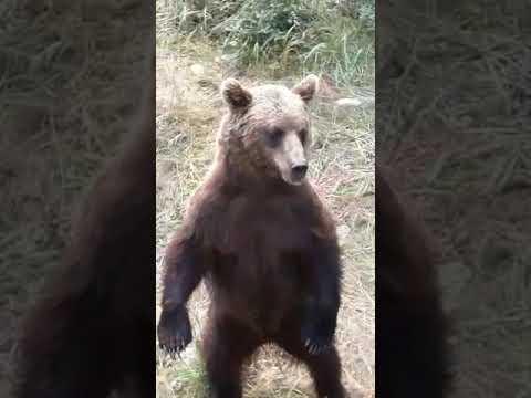 Медведи в Хабаровском крае