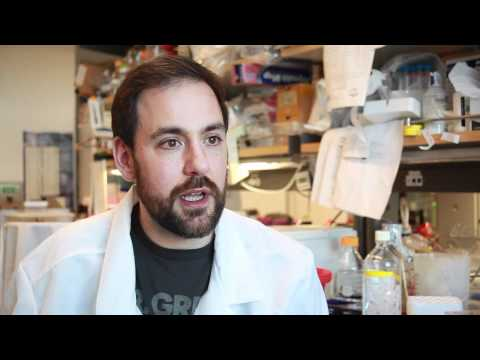Siebel Scholar talks about research on genetic enhancers
