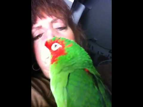 Conversations with Pudgy the Mitred Conure Parrot