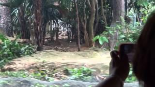 シンガポール動物園 リバーサファリのクルーズ