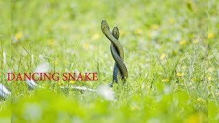Snake fighting/ Scariest snake fight ever