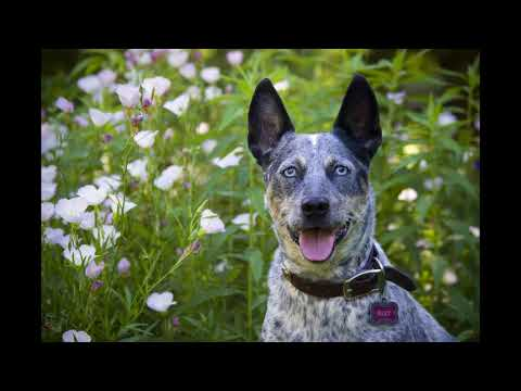 Kim Brophey - Meet Your Dog - NPR - Interview KAXE Radio Regional NPR