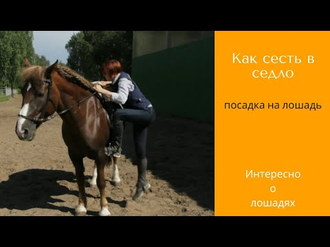 Как залазить на лошадь