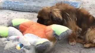 Ph.i.lL - собака трахает кролика