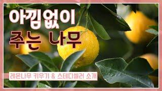 [레몬나무 키우기] 스테디셀러 아낌없이 주는 나무