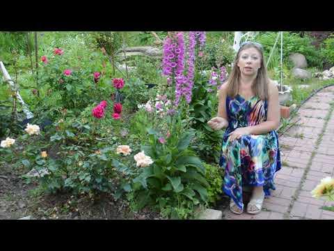 Вопрос: Когда и как лучше подкармливать растения в цветнике?