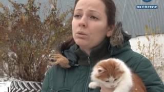 В Пензе выступят против издевательств над животными