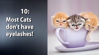 10 Mind Blowing Facts about Cats