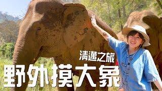 和大象一起洗澡!泰國清邁之旅Part 1|金魚腦Goldfish Brain ...