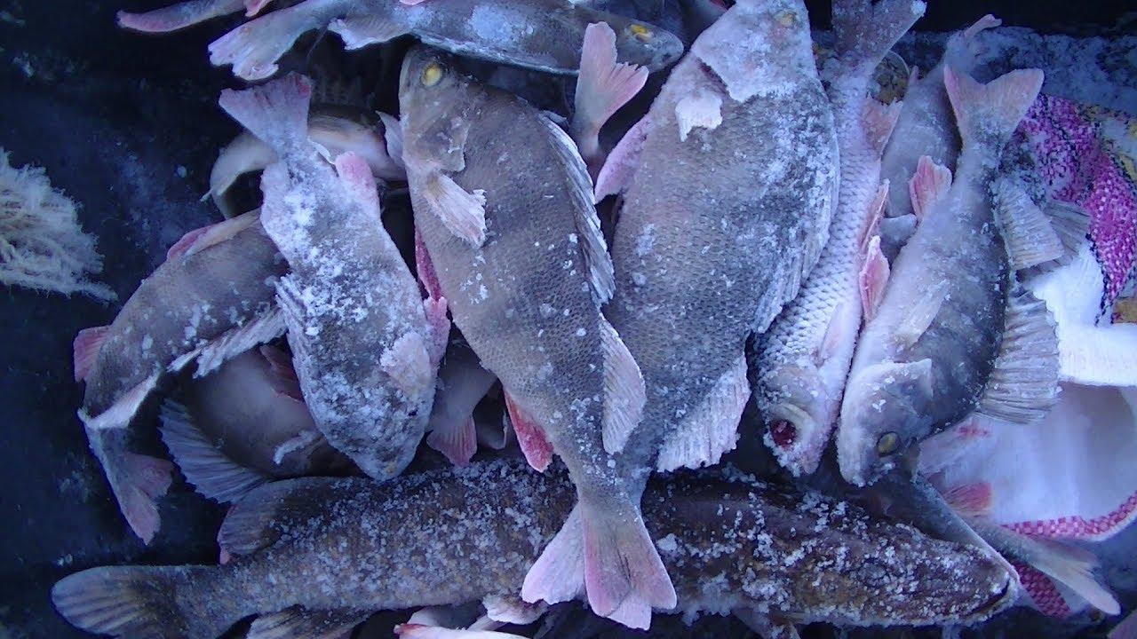 Зимняя Рыбалка в Мороз. Хотели поймать Плотву а наловили Окуня и Щуку!