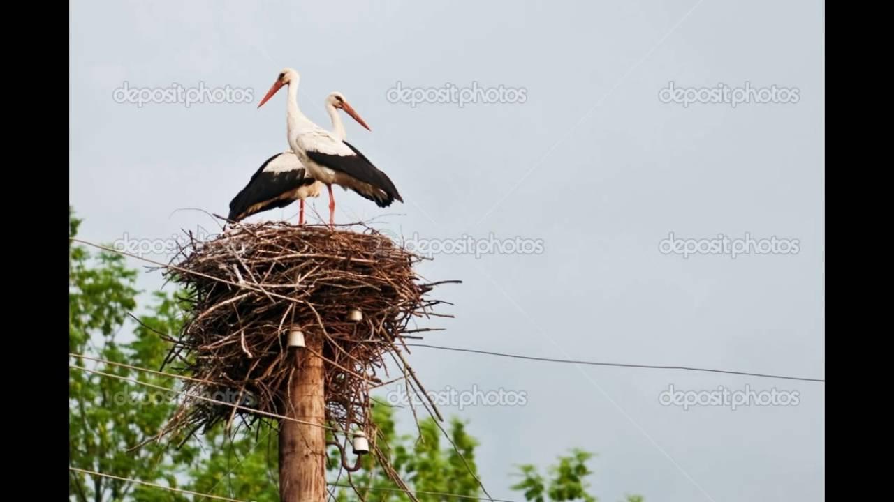 Гнездо для аиста своими руками. Как сделать гнездо для аиста