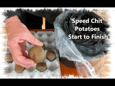 HGV Grow Potatoes 'Speed Chit' Potatoes Start to Finish