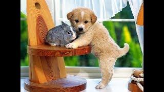 СМЕШНЫЕ И МИЛЫЕ ЖИВОТНЫЕ | Подборка видео приколов с животными