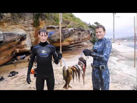 Dee Why Spearfishing Trip