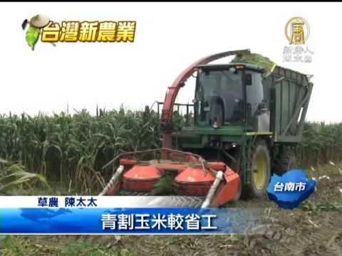 台灣農業青割玉米 台灣農業的另一綠金產業