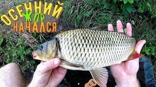 Осенний Жор рыбы начался Ловля карпа и не только на Днепре