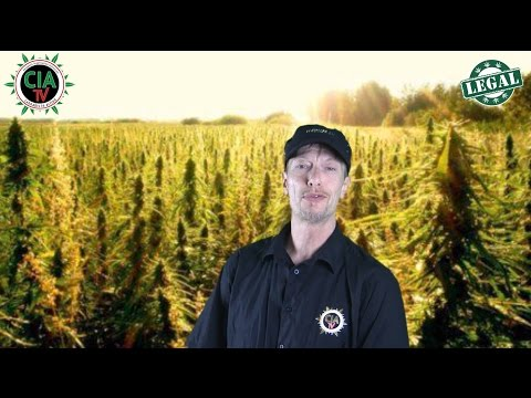 CIA-TV°- testet Aeroponik Systems - ein effektives Bewässerungssystem