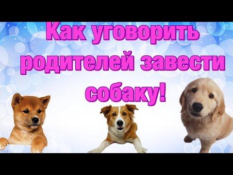 Как уговорить родителей завести собаку // Моя история