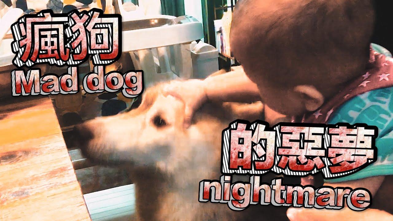 瘋狗的惡夢Mad dog nightmare《家有賤狗HUSKY》#二哈#哈士奇#HUSKY