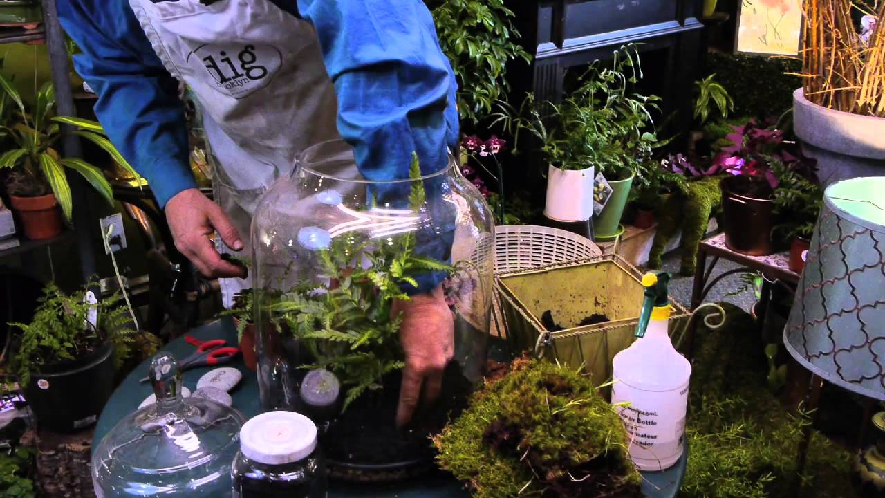 How To Make A Fern Moss Terrarium Terrariums More Youtube