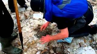 Ловля карпа руками Ладыжин 2016