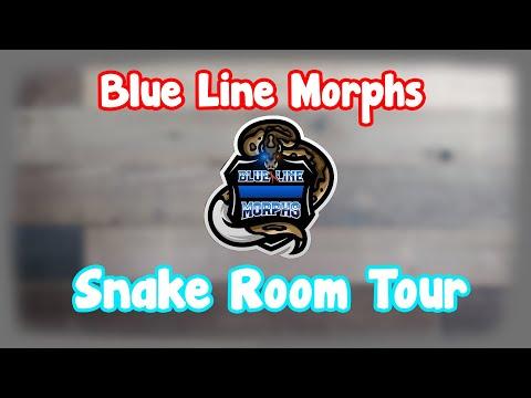 blue-line-morphs-snake-room-tour-part-1