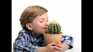 Video meet: the cactus kid download MP3, 3GP, MP4, WEBM, AVI, FLV November 2017