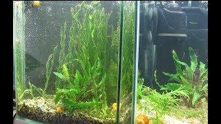 Маленький аквариум с валлиснерией