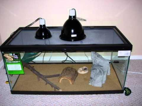 Vistazo al cuidado de una iguana verde youtube - Que vale construir una casa ...