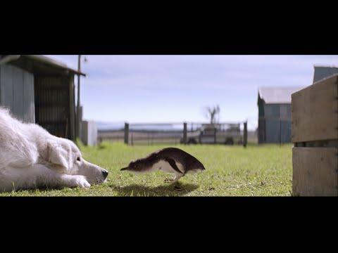 Oddball (2015) Trailer [HD]