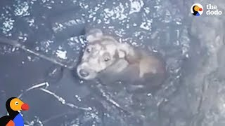Crying Puppy Trapped in Deep Well Rescued | The Dodo